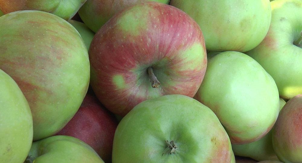 Урожай яблок: о каких проблемах он может рассказать