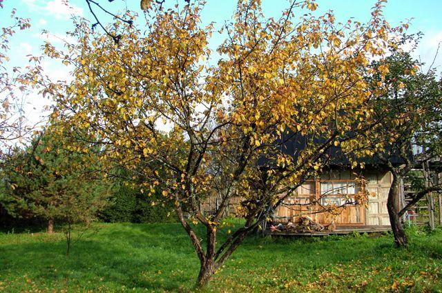 Почему деревья в саду погибают фото - 39310