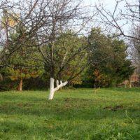 31354 Почему деревья в саду погибают
