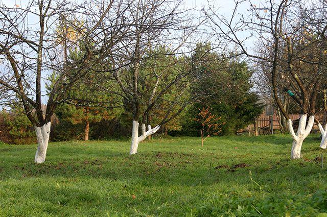 Почему деревья в саду погибают