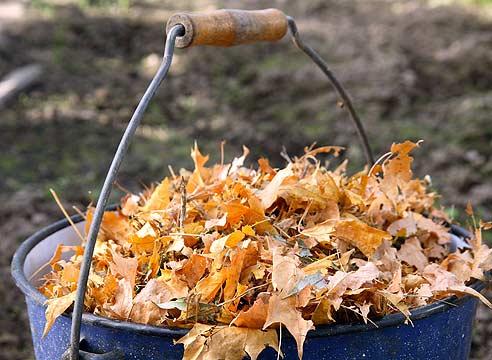 Что делать с прошлогодними с листьями