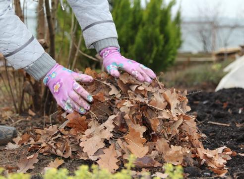 31368 Что делать с прошлогодними с листьями