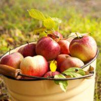 31380 Семь секретов хорошего урожая яблок