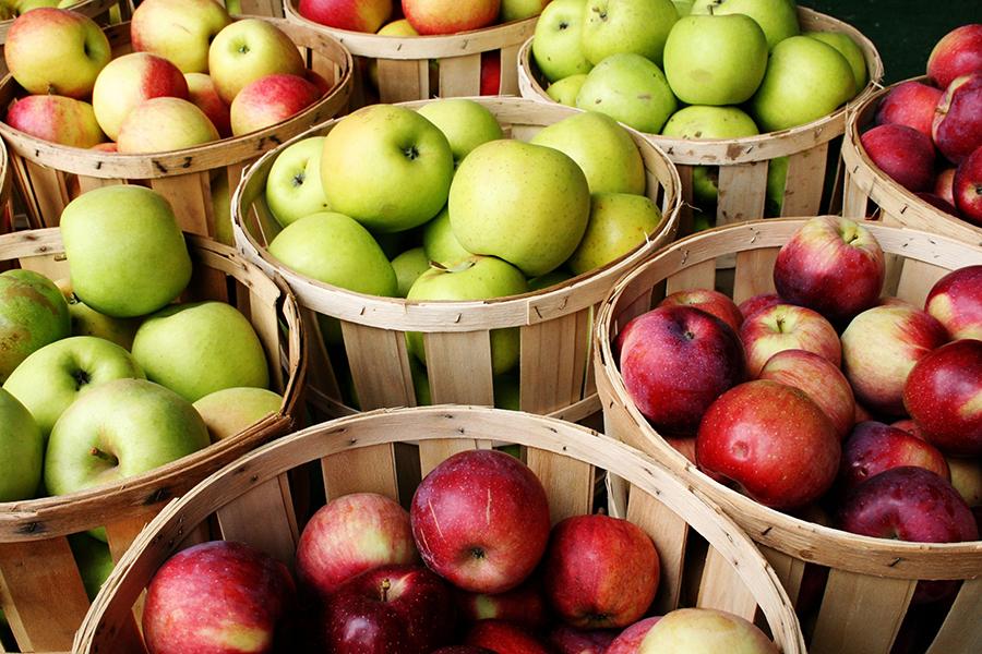 Семь секретов хорошего урожая яблок