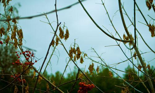 Листья завяли, но выросли ветки