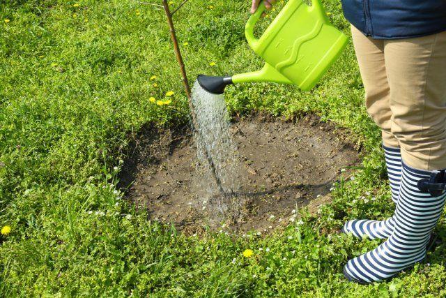 31426 Как сделать глиняную болтушку для саженцев