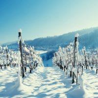 31436 Утепляем корни к зиме