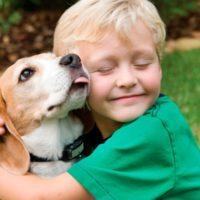 31260 Выбор собаки, любимый питомец для детей и взрослых