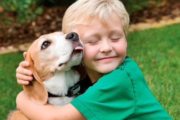 Выбор собаки, любимый питомец для детей и взрослых
