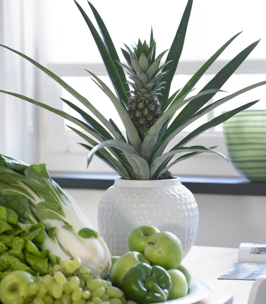 А осенью мы начнем выращивать… ананасы на подоконнике