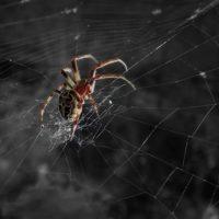 31651 Вредны ли пауки на даче