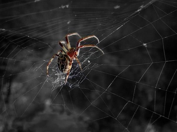 Вредны ли пауки на даче