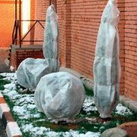 31661 Защитите хвойные зимой