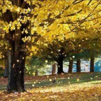 31681 Не осыпались листья с деревьев, надо ли беспокоиться?