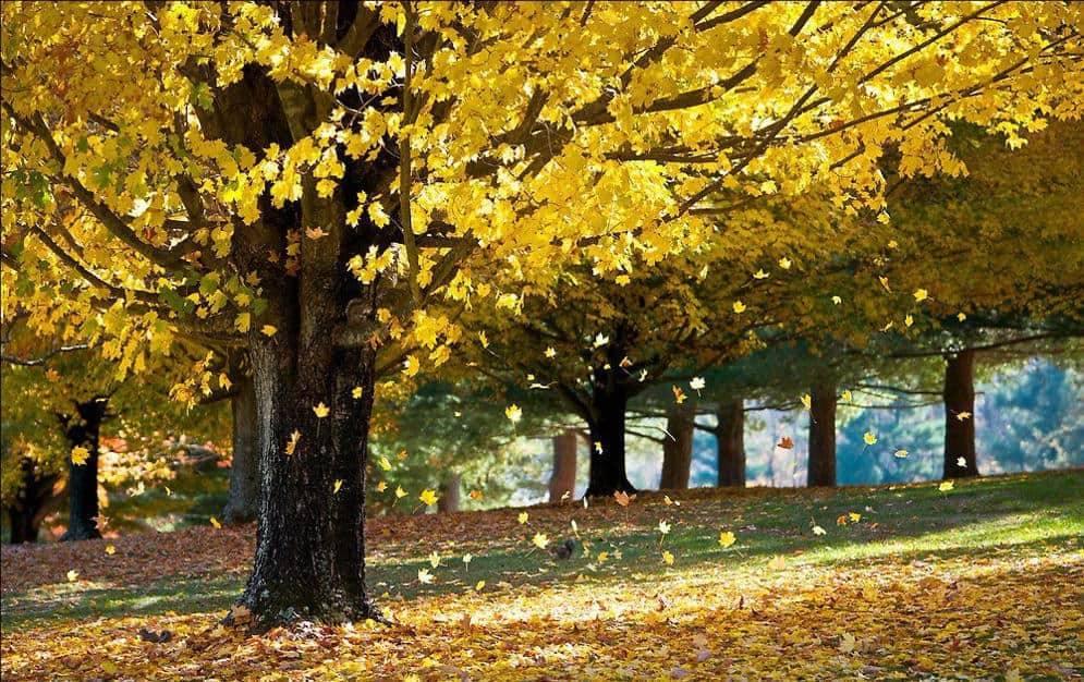 Не осыпались листья с деревьев, надо ли беспокоиться?