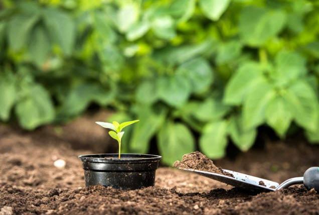 Борная кислота – удобрение панацея