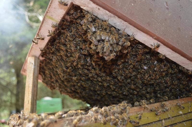 Проблемы с пчелами и их устранение