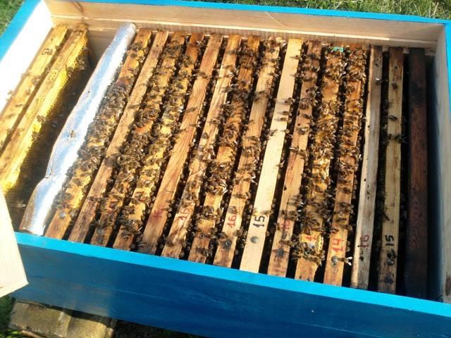 Когда и как расширять гнездо пчел