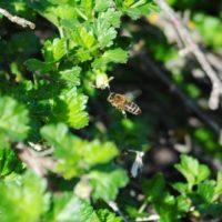31820 Когда и как расширять гнездо пчел