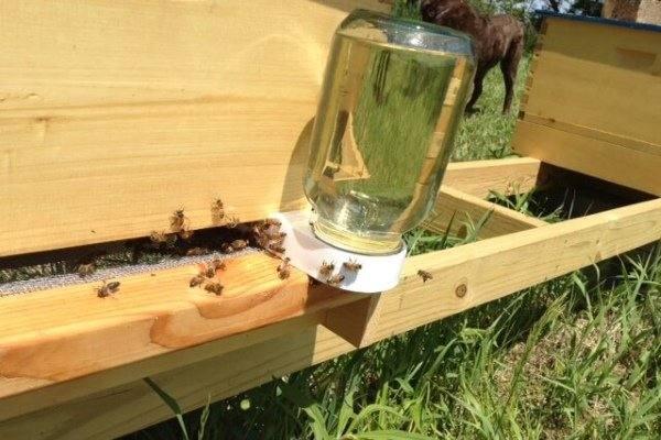 31825 Пчелиный корм: случаи подкормки пчел, различные рецепты