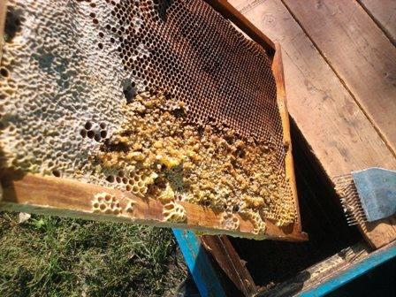 Пчелиный корм: случаи подкормки пчел, различные рецепты
