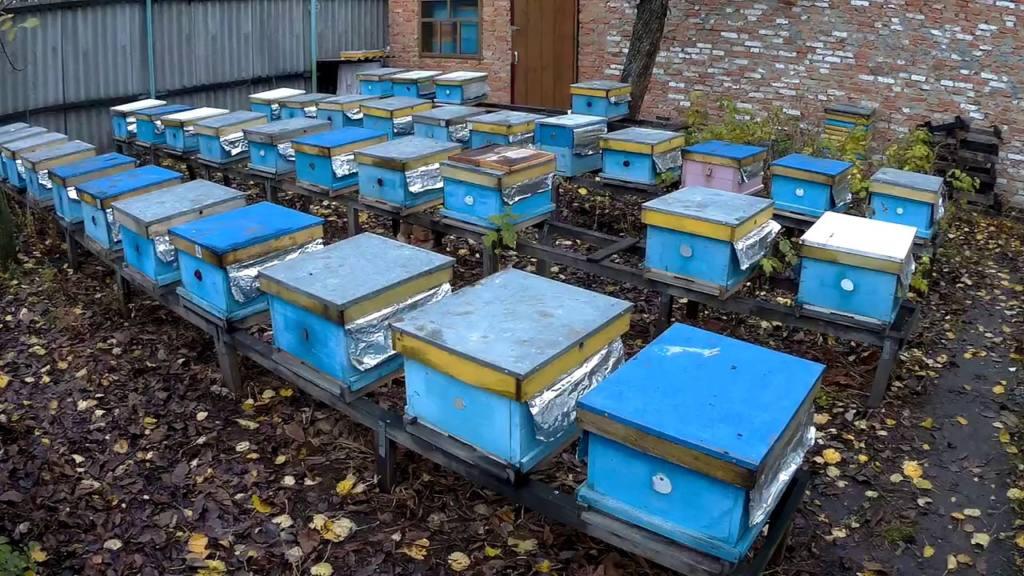 Нормы пчеловодства: правила и законы содержания пчел