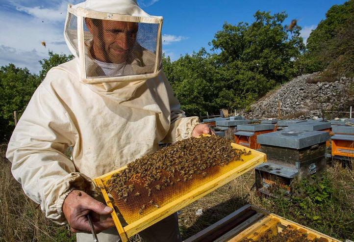 31832 Нормы пчеловодства: правила и законы содержания пчел