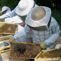 31880 Как приготовить канди для пчел, когда начинать подкормку?