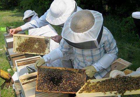 Как приготовить канди для пчел, когда начинать подкормку?
