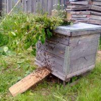 31891 Признаки роения пчел, разновидности и выход пчелиного роя