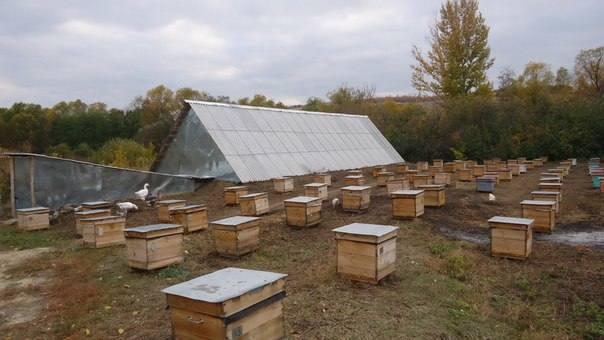 Особенности и виды омшаников для пчел, изготовление своими руками