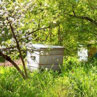 31923 Формирование пчелиных отводков и их виды