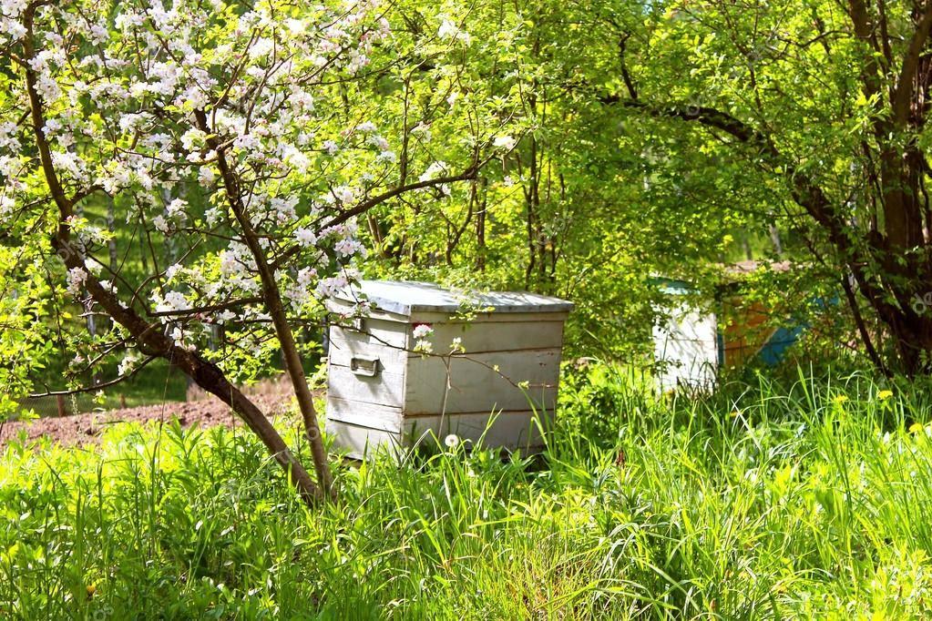 Формирование пчелиных отводков и их виды