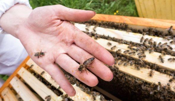 Пчеловодство по методу Цебро, его улей и советы