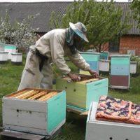 31964 Пчеловодство по методу Цебро, его улей и советы