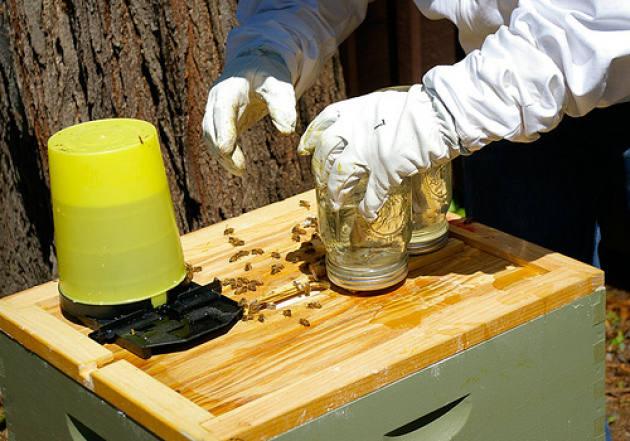 Виды кормушек для пчел, изготовление своими руками