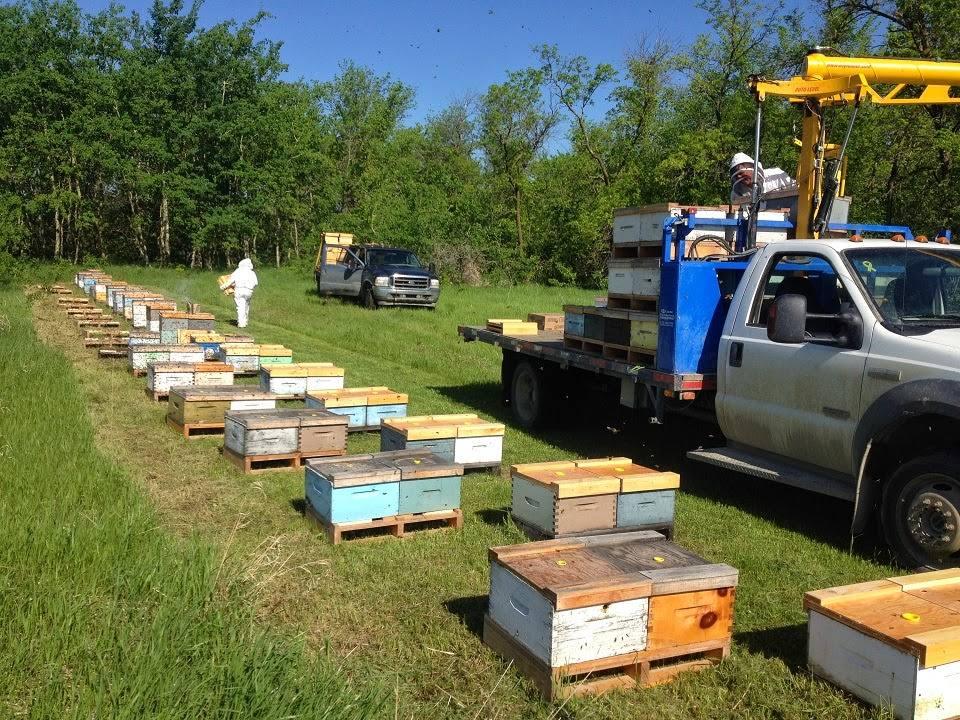 С чего начать пчеловодство: основы пасеки с нуля