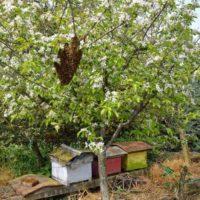 32057 Стадии развития пчелы, формирование взрослой особи