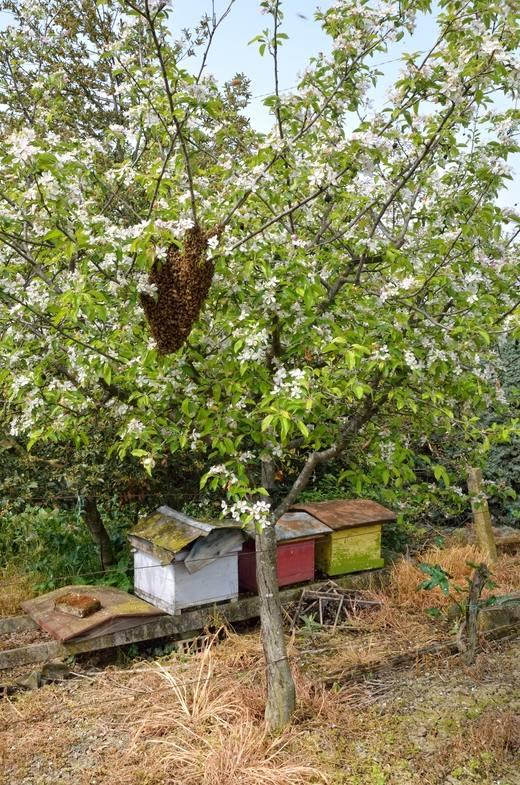 Стадии развития пчелы, формирование взрослой особи