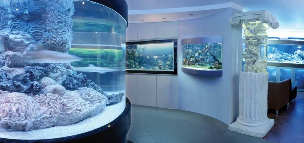 Кто должен ухаживать за аквариумом в магазине?