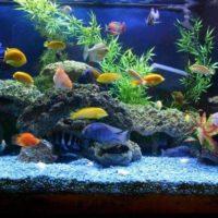 32107 Кто должен ухаживать за аквариумом в магазине?