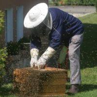 32164 Какие существуют методы пчеловождения?
