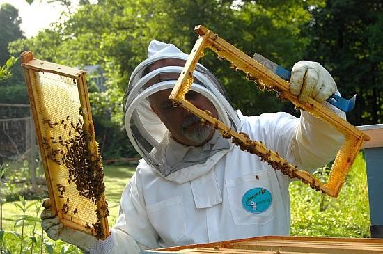 Какие существуют методы пчеловождения?