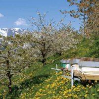 32180 Пчеловодство, как бизнес: этапы организации