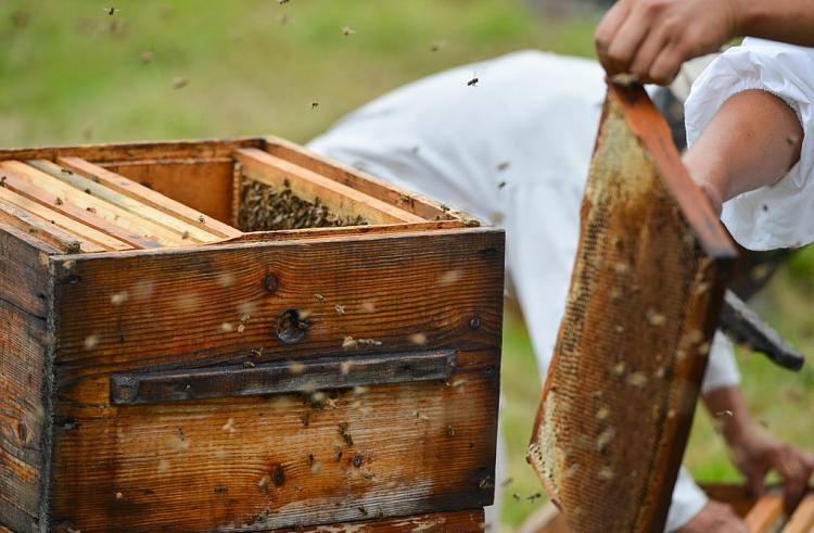 Пчеловодство, как бизнес: этапы организации