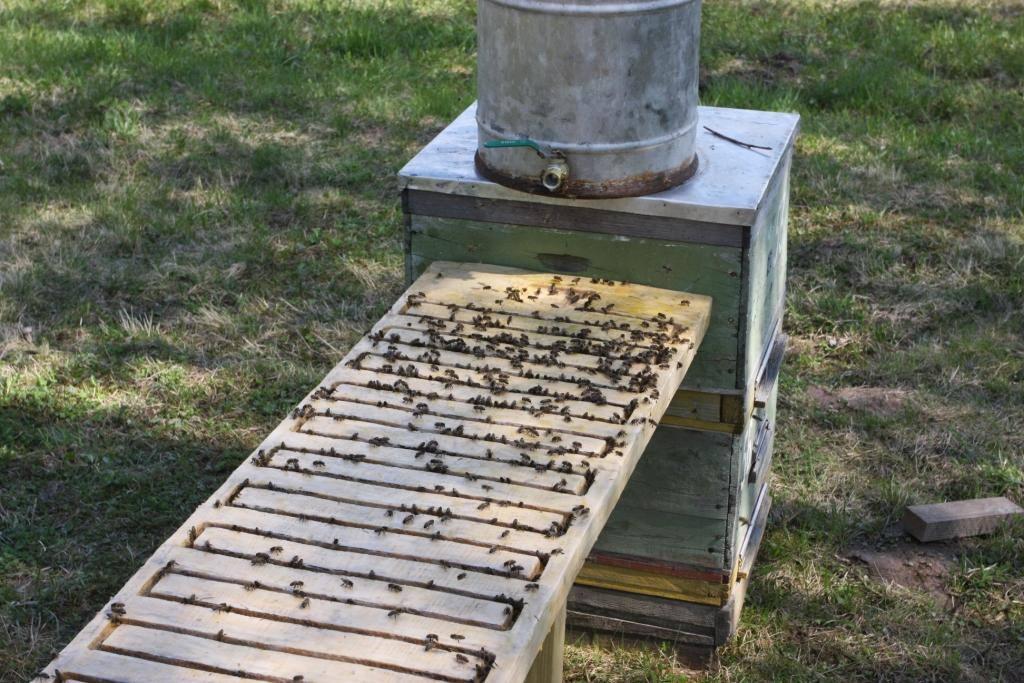Что нужно учесть при установке поилок для пчел