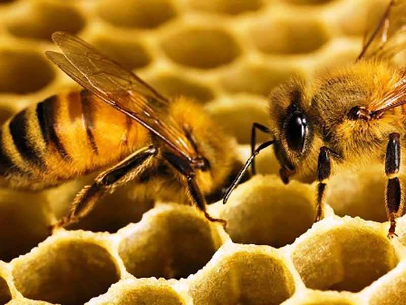 Враги пчел, кого стоит опасаться?