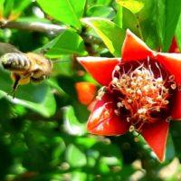 32264 С чего начать разведение пчел?
