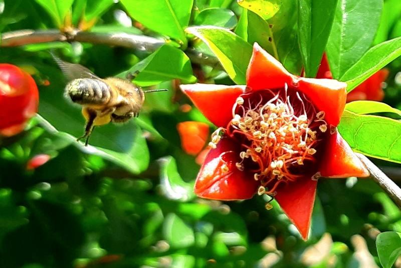 С чего начать разведение пчел?