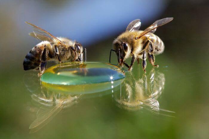 32298 Подкормка пчел. Как кормить пчел?